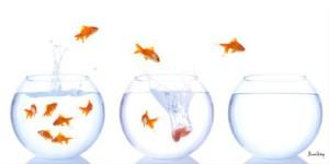 tableau-decoration-aquariums-poissons-rouges
